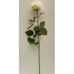 Bouquet 7 roses blanches 70 CM