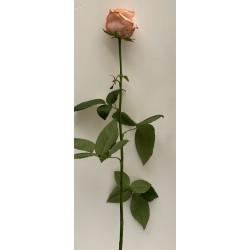 Bouquet 7 roses roses 70 CM