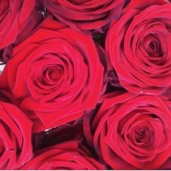 Bouquet 10 roses rouges 70 CM